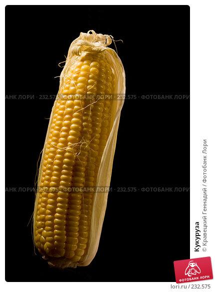 Кукуруза, фото № 232575, снято 9 октября 2005 г. (c) Кравецкий Геннадий / Фотобанк Лори