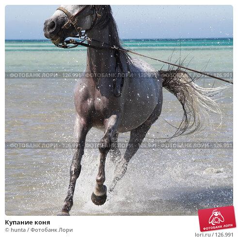 Купить «Купание коня», фото № 126991, снято 16 сентября 2007 г. (c) hunta / Фотобанк Лори