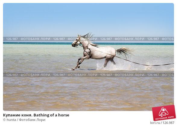 Купание коня. Bathing of a horse, фото № 126987, снято 16 сентября 2007 г. (c) hunta / Фотобанк Лори