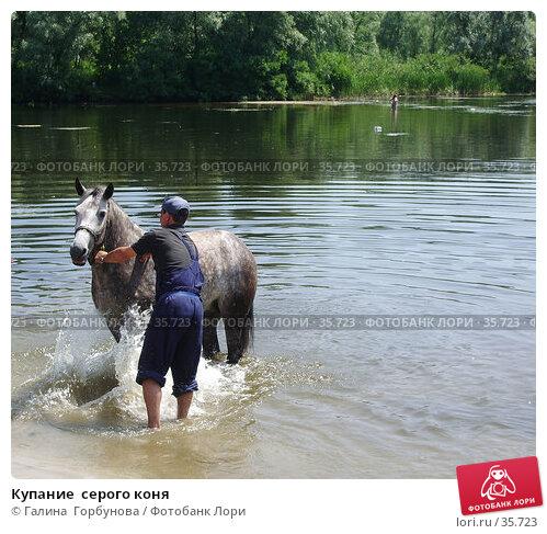 Купание  серого коня, фото № 35723, снято 8 декабря 2016 г. (c) Галина  Горбунова / Фотобанк Лори