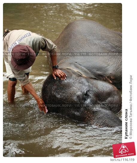 Купание слона, фото № 116119, снято 30 октября 2007 г. (c) Морозова Татьяна / Фотобанк Лори