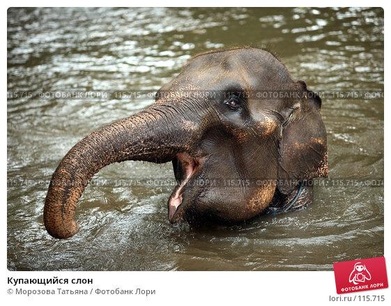 Купить «Купающийся слон», фото № 115715, снято 30 октября 2007 г. (c) Морозова Татьяна / Фотобанк Лори