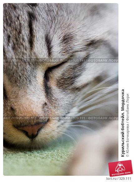 Курильский бобтейл. Мордочка, фото № 329111, снято 5 сентября 2007 г. (c) Юлия Бочкарева / Фотобанк Лори