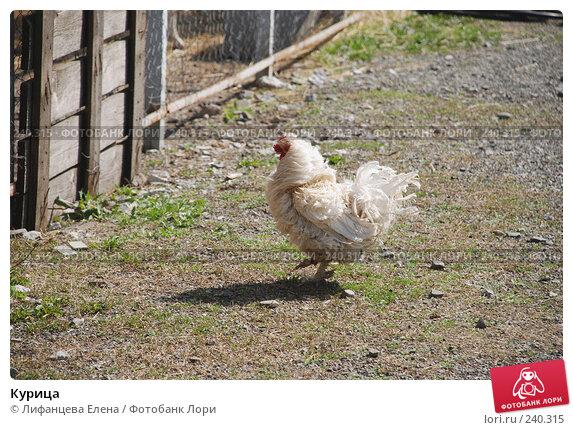 Курица, фото № 240315, снято 27 марта 2008 г. (c) Лифанцева Елена / Фотобанк Лори