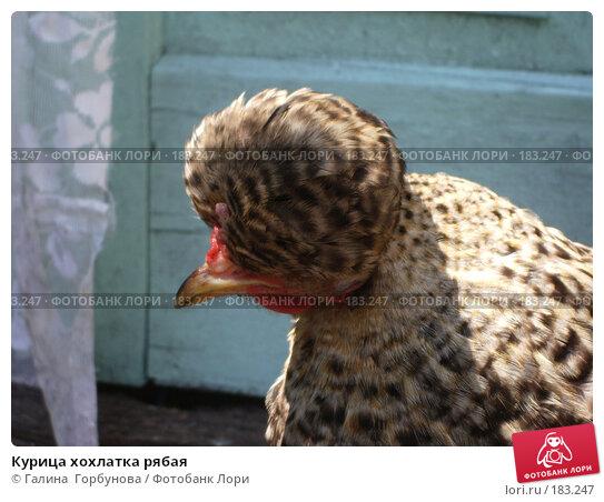 Курица хохлатка рябая, фото № 183247, снято 8 июля 2005 г. (c) Галина  Горбунова / Фотобанк Лори
