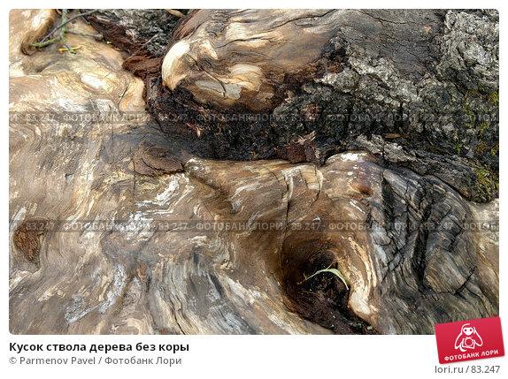 Кусок ствола дерева без коры, фото № 83247, снято 27 июня 2007 г. (c) Parmenov Pavel / Фотобанк Лори