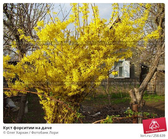 Куст форситии на даче, фото № 258639, снято 11 апреля 2008 г. (c) Олег Хархан / Фотобанк Лори