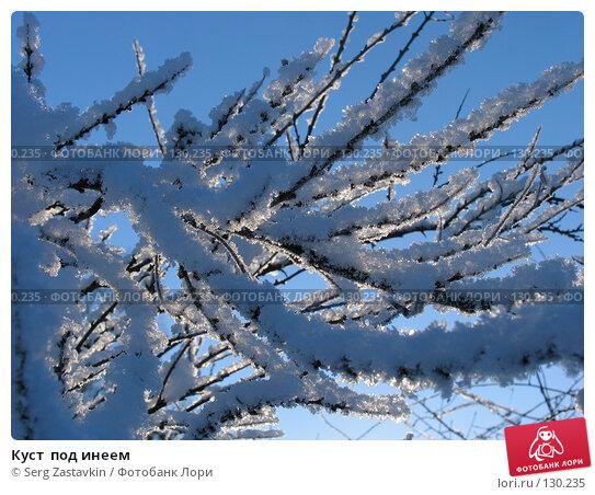 Куст  под инеем, фото № 130235, снято 21 декабря 2005 г. (c) Serg Zastavkin / Фотобанк Лори