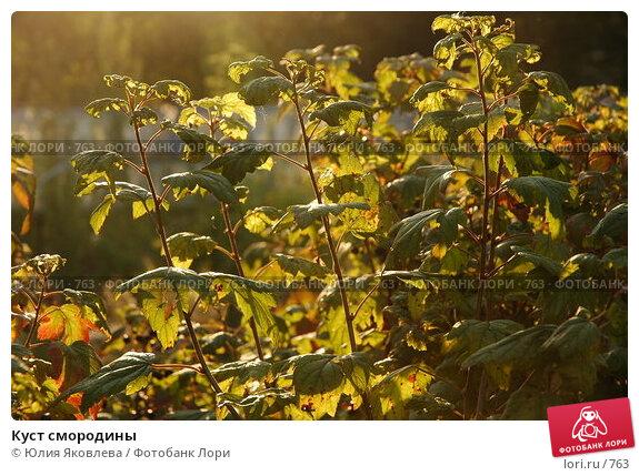 Куст смородины, фото № 763, снято 5 августа 2005 г. (c) Юлия Яковлева / Фотобанк Лори