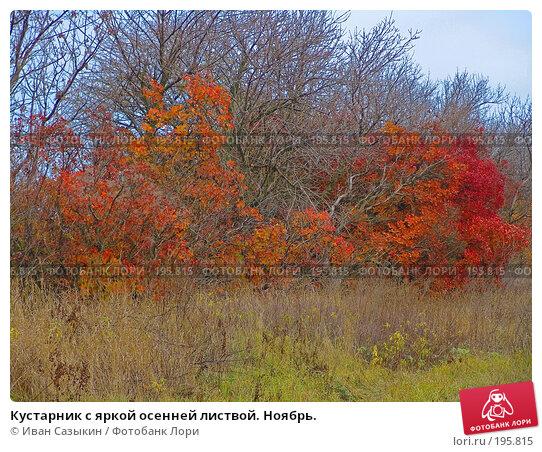 Кустарник с яркой осенней листвой. Ноябрь., фото № 195815, снято 13 ноября 2004 г. (c) Иван Сазыкин / Фотобанк Лори