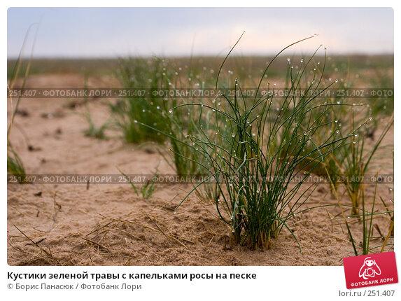 Купить «Кустики зеленой травы с капельками росы на песке», фото № 251407, снято 11 апреля 2008 г. (c) Борис Панасюк / Фотобанк Лори