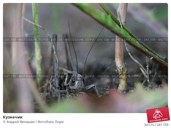 Кузнечик, фото № 241159, снято 16 августа 2007 г. (c) Андрей Явнашан / Фотобанк Лори