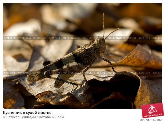 Кузнечик в сухой листве, фото № 169863, снято 12 августа 2007 г. (c) Петухов Геннадий / Фотобанк Лори