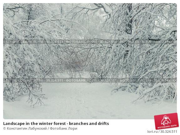 Купить «Landscape in the winter forest - branches and drifts», фото № 30324511, снято 4 февраля 2018 г. (c) Константин Лабунский / Фотобанк Лори