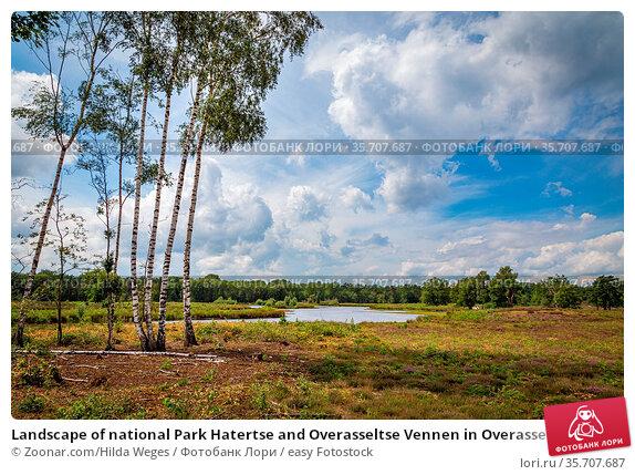 Landscape of national Park Hatertse and Overasseltse Vennen in Overasselt... Стоковое фото, фотограф Zoonar.com/Hilda Weges / easy Fotostock / Фотобанк Лори