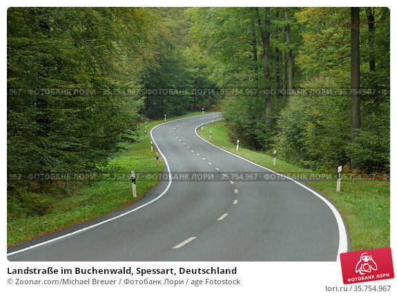 Landstraße im Buchenwald, Spessart, Deutschland. Стоковое фото, фотограф Zoonar.com/Michael Breuer / age Fotostock / Фотобанк Лори