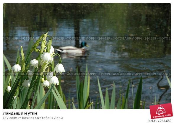 Ландыши и утки, фото № 244659, снято 22 мая 2005 г. (c) Vladimirs Koskins / Фотобанк Лори