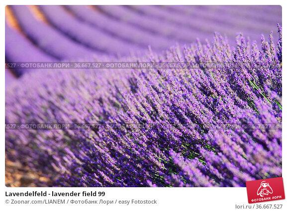 Lavendelfeld - lavender field 99. Стоковое фото, фотограф Zoonar.com/LIANEM / easy Fotostock / Фотобанк Лори