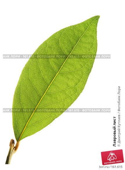 Лавровый лист, фото № 161615, снято 22 ноября 2007 г. (c) Дмитрий Кутлаев / Фотобанк Лори