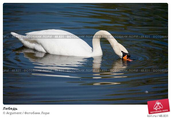 Лебедь, фото № 48831, снято 18 мая 2007 г. (c) Argument / Фотобанк Лори