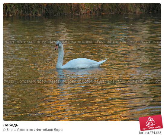 Лебедь, фото № 74663, снято 1 марта 2005 г. (c) Елена Яковенко / Фотобанк Лори