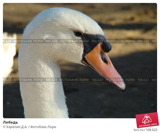 Лебедь, фото № 108623, снято 27 октября 2007 г. (c) Карелин Д.А. / Фотобанк Лори