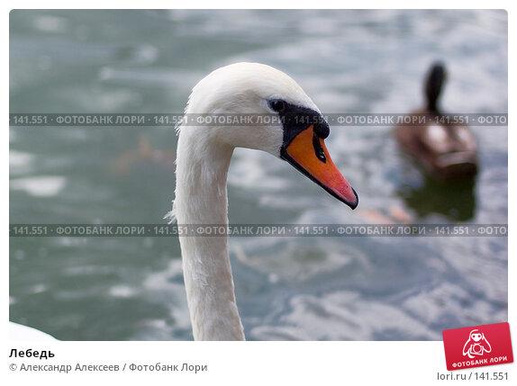 Купить «Лебедь», эксклюзивное фото № 141551, снято 27 июля 2007 г. (c) Александр Алексеев / Фотобанк Лори