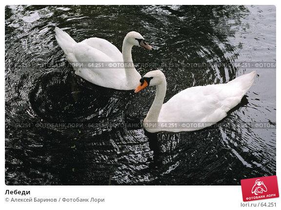 Купить «Лебеди», фото № 64251, снято 20 апреля 2018 г. (c) Алексей Баринов / Фотобанк Лори