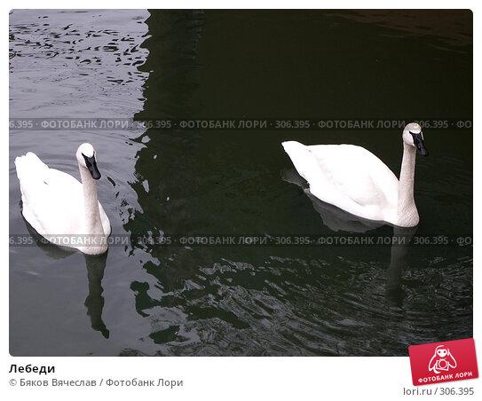 Лебеди, фото № 306395, снято 16 апреля 2008 г. (c) Бяков Вячеслав / Фотобанк Лори