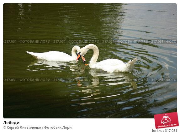 Лебеди, фото № 317031, снято 8 июня 2008 г. (c) Сергей Литвиненко / Фотобанк Лори