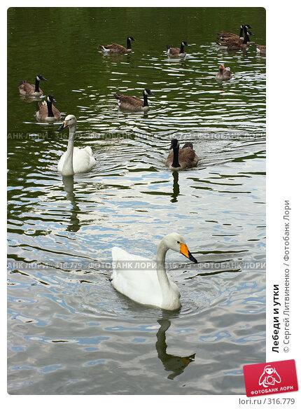Лебеди и утки, фото № 316779, снято 8 июня 2008 г. (c) Сергей Литвиненко / Фотобанк Лори