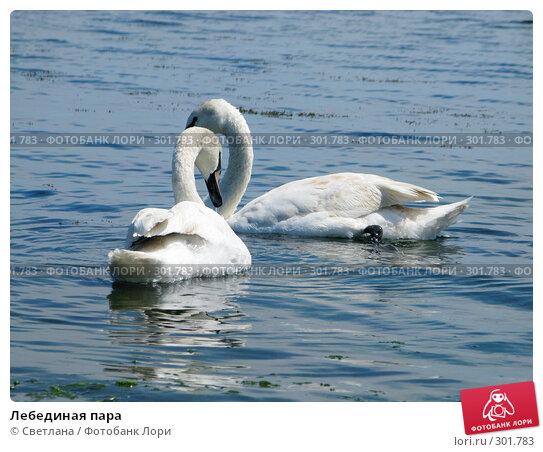 Лебединая пара, фото № 301783, снято 1 мая 2008 г. (c) Светлана / Фотобанк Лори