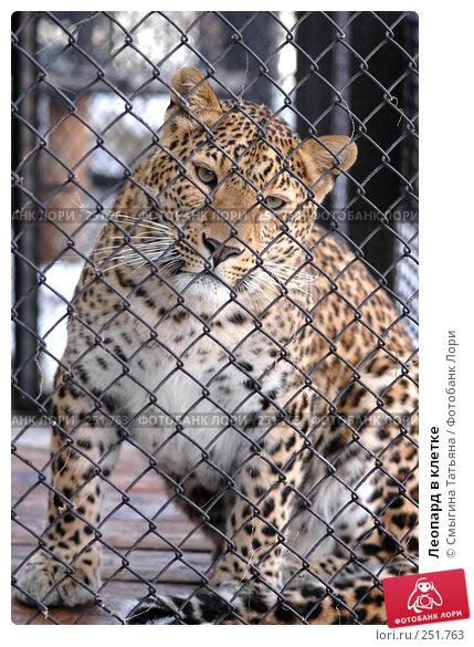 Леопард в клетке, фото № 251763, снято 21 марта 2007 г. (c) Смыгина Татьяна / Фотобанк Лори
