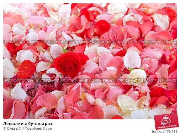 Купить «Лепестки и бутоны роз», фото № 179051, снято 28 октября 2007 г. (c) Ольга С. / Фотобанк Лори