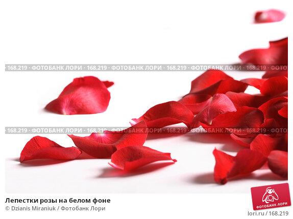Лепестки розы на белом фоне, фото № 168219, снято 5 января 2008 г. (c) Dzianis Miraniuk / Фотобанк Лори