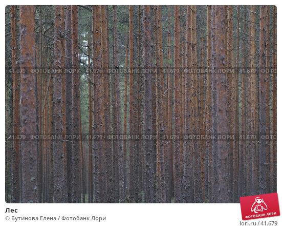 Лес, фото № 41679, снято 29 апреля 2007 г. (c) Бутинова Елена / Фотобанк Лори