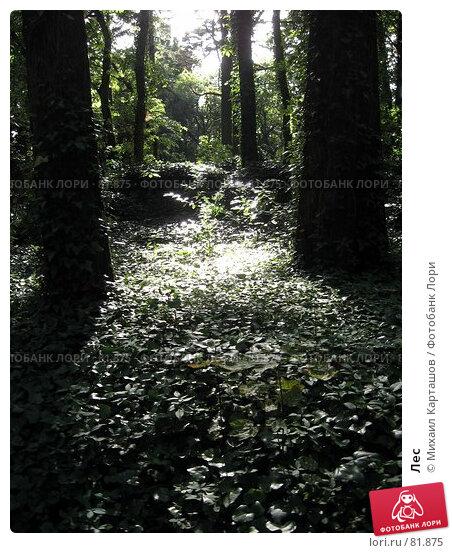 Лес, эксклюзивное фото № 81875, снято 29 июля 2007 г. (c) Михаил Карташов / Фотобанк Лори