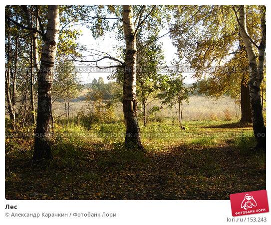 Лес, фото № 153243, снято 22 сентября 2007 г. (c) Александр Карачкин / Фотобанк Лори