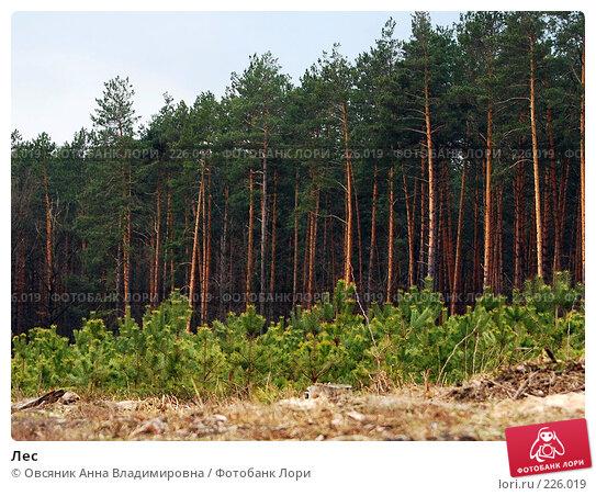 Лес, фото № 226019, снято 15 марта 2008 г. (c) Овсяник Анна Владимировна / Фотобанк Лори