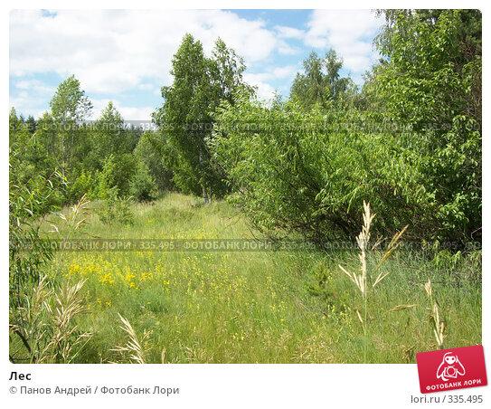 Лес, фото № 335495, снято 21 июня 2008 г. (c) Панов Андрей / Фотобанк Лори