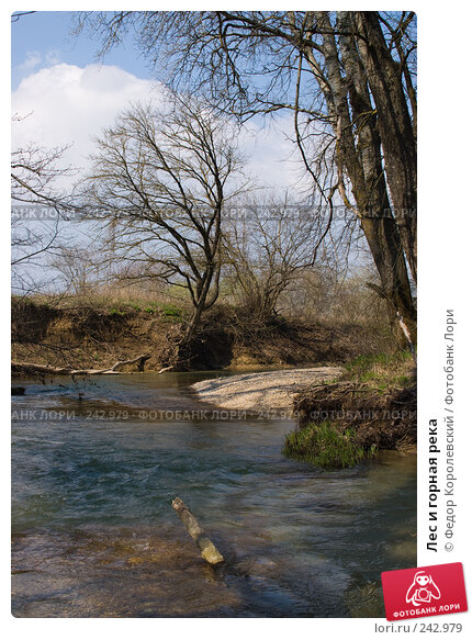 Лес и горная река, фото № 242979, снято 4 апреля 2008 г. (c) Федор Королевский / Фотобанк Лори