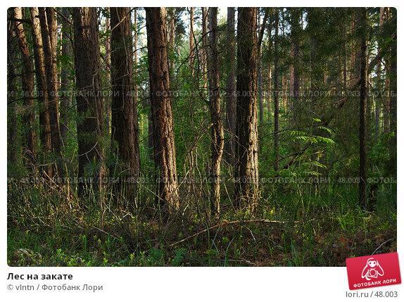 Купить «Лес на закате», фото № 48003, снято 29 мая 2007 г. (c) vlntn / Фотобанк Лори