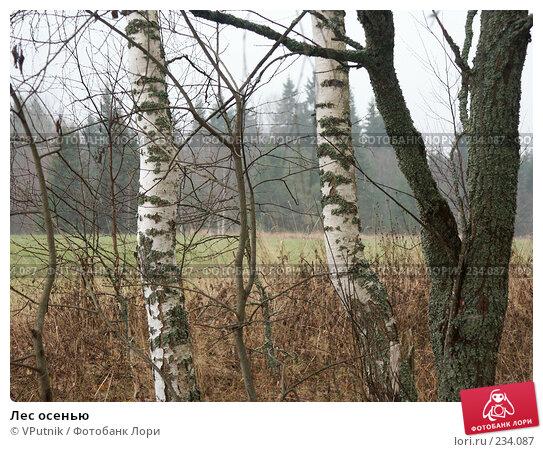 Лес осенью, фото № 234087, снято 5 ноября 2004 г. (c) VPutnik / Фотобанк Лори