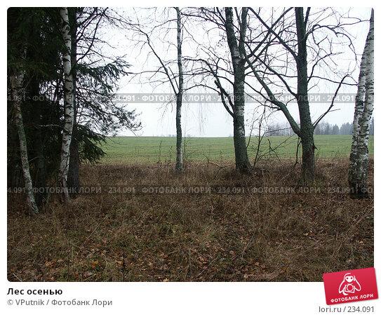 Лес осенью, фото № 234091, снято 5 ноября 2004 г. (c) VPutnik / Фотобанк Лори