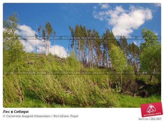 Лес в Сибири, фото № 282007, снято 10 июня 2007 г. (c) Селигеев Андрей Иванович / Фотобанк Лори