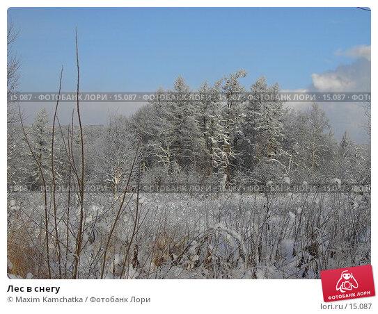Купить «Лес в снегу», фото № 15087, снято 12 декабря 2006 г. (c) Maxim Kamchatka / Фотобанк Лори