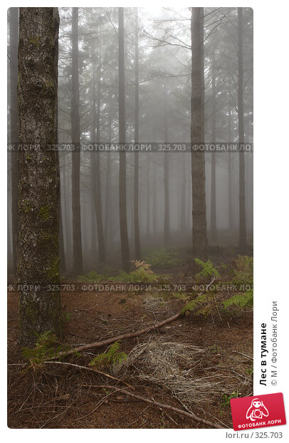 Лес в тумане, фото № 325703, снято 26 июня 2017 г. (c) Михаил / Фотобанк Лори