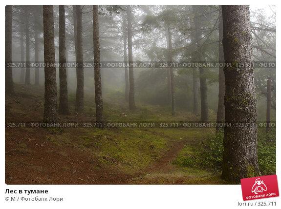 Лес в тумане, фото № 325711, снято 29 марта 2017 г. (c) Михаил / Фотобанк Лори