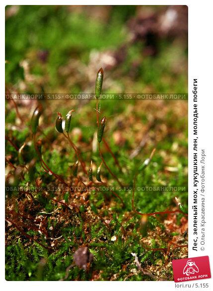Лес, зеленый мох, кукушкин лен, молодые побеги, фото № 5155, снято 23 мая 2006 г. (c) Ольга Красавина / Фотобанк Лори