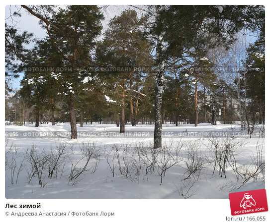 Лес зимой, фото № 166055, снято 8 марта 2006 г. (c) Андреева Анастасия / Фотобанк Лори